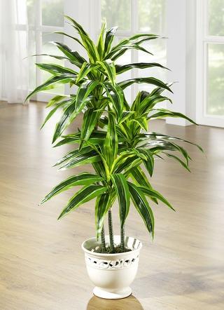 dracena palme im topf kunst textilpflanzen brigitte. Black Bedroom Furniture Sets. Home Design Ideas